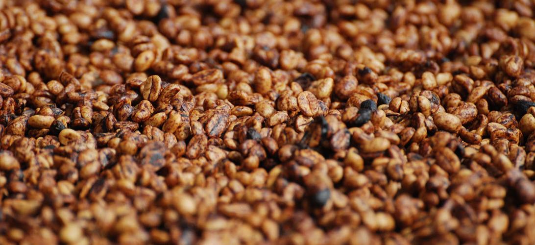 Zpracování zrnkové kávy medovou metodou