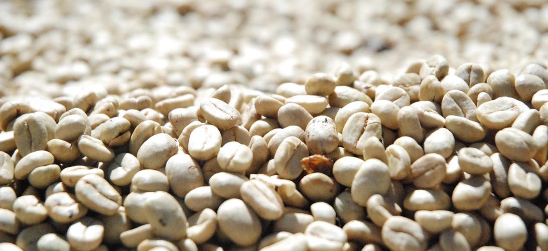 Vylupování kávových zrn (HULLING)